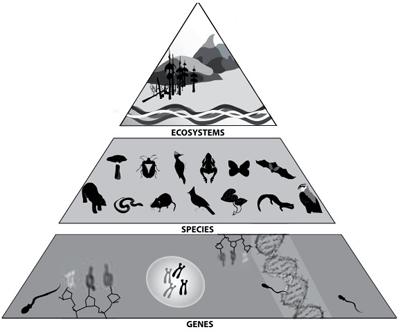 Taking Natures Pulse Section 1 Primer On Biodiversity Importance